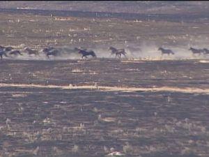 635751816752538844-wild-horses